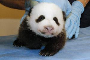 pandashutdown_one